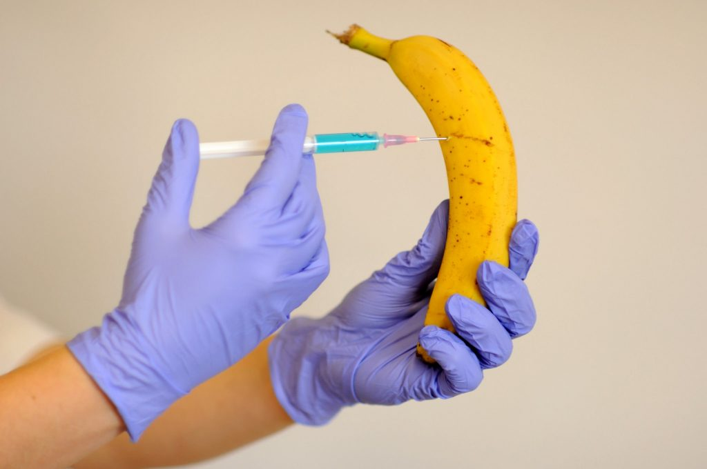 Une banane OGM