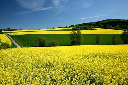 colza biocarburant