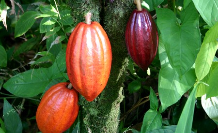 Frabrication chocolat artisanal ou en usine