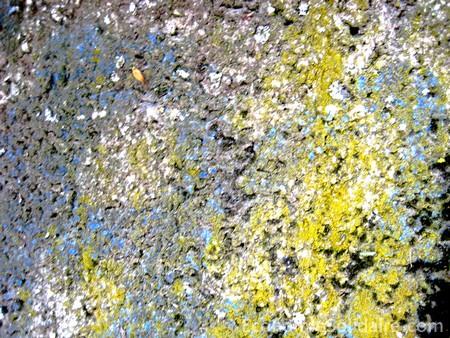 peinture ecologique