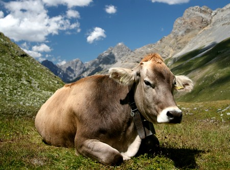 methane co2 vache