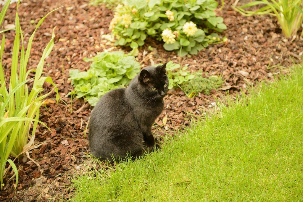 R pulsifs naturels contre les chats conomie solidaire - Repulsif pour chat vinaigre blanc ...