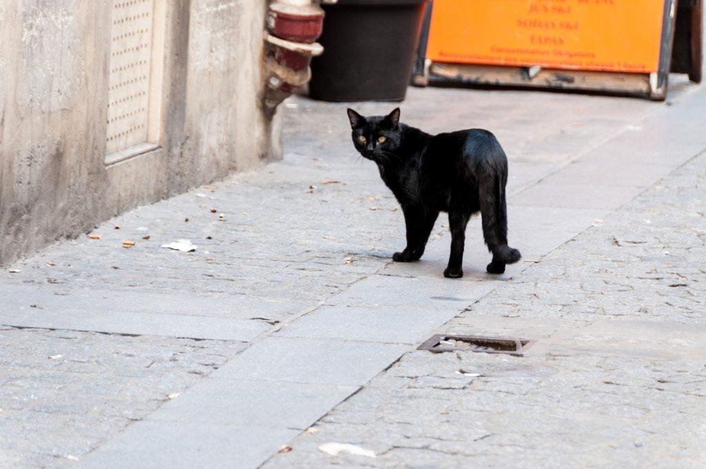 R pulsifs naturels contre les chats conomie solidaire - Repulsif pour chats dans les jardins ...