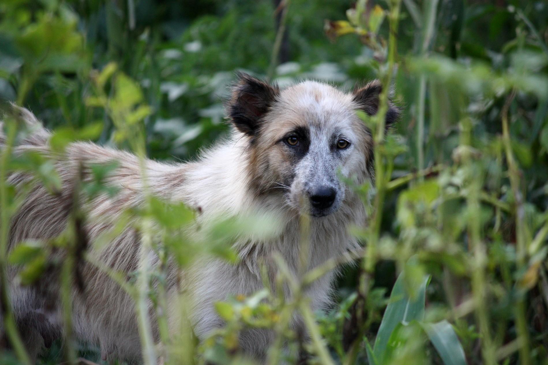 Répulsifs naturels contre les chiens - Économie Solidaire
