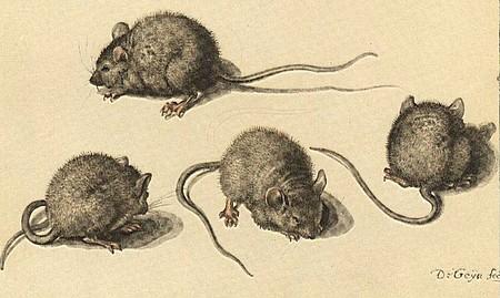 repulsifs naturels pour souris
