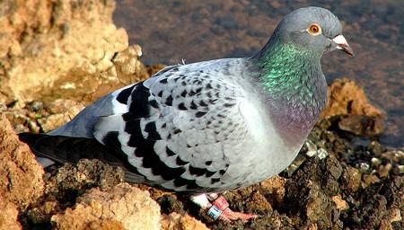 repulsifs pour oiseaux