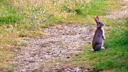 repulsifs naturels pour lapins