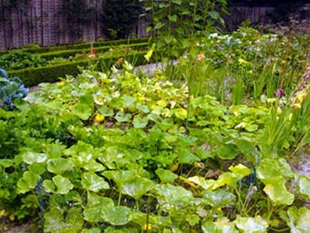 Conseils colos pour avoir un beau jardin ou potager for Avoir un beau jardin