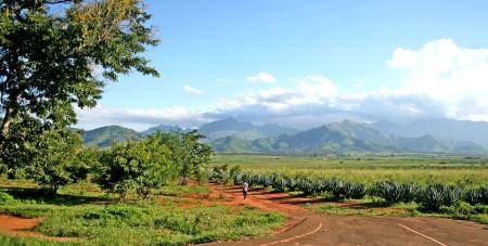 Agriculture en Tanzanie