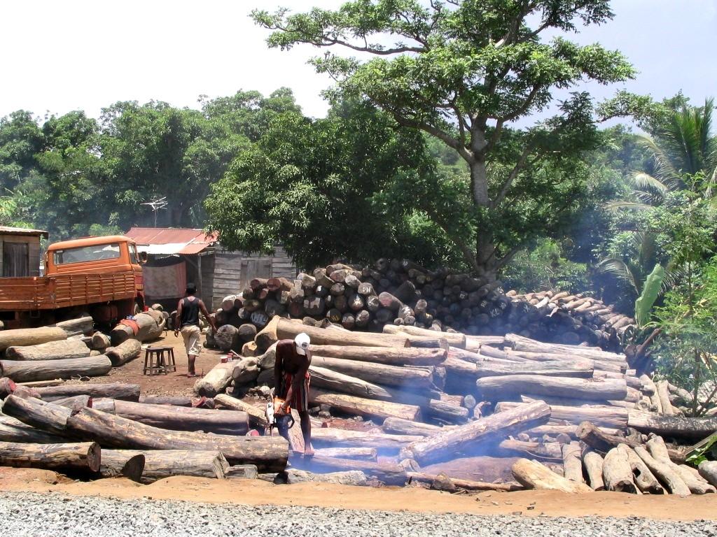 Coupe Rase au Madagascar