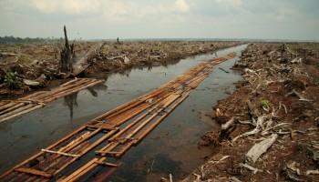 Coupe Rase en Indonésie