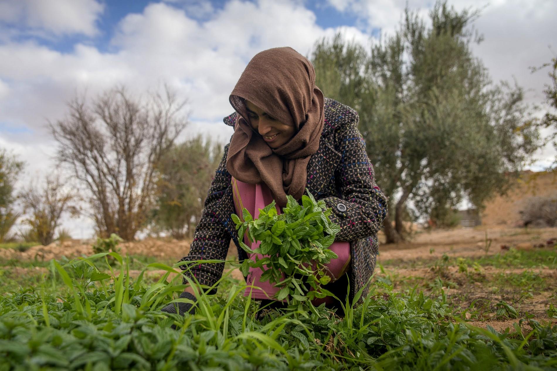 Agriculture en sols arides