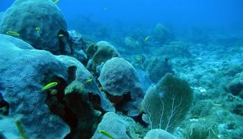 L'océan et son écosystème