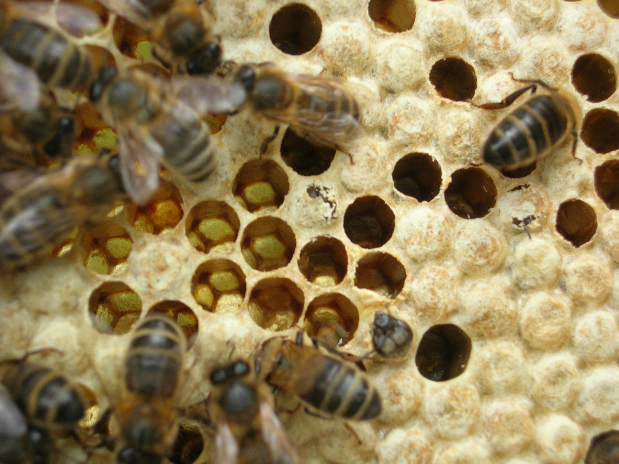 fabriquer des bougies en cire d 39 abeille conomie solidaire. Black Bedroom Furniture Sets. Home Design Ideas
